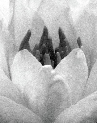 Photograph - On The Dark Side 02 - Water Lily - Bw - Water Paper by Pamela Critchlow