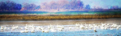 Wildlife Landscape Mixed Media - On The Delta Panorama by Terry Davis