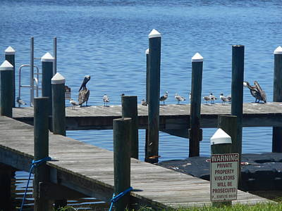 Easterseals Photograph - On The Docks by Thomas J