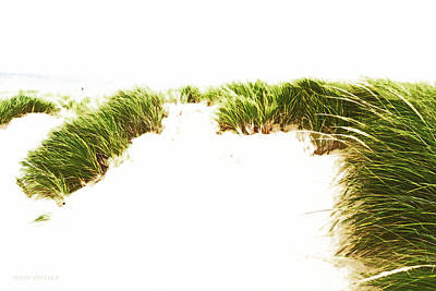 Photograph - On The Dunes by Susan Vineyard