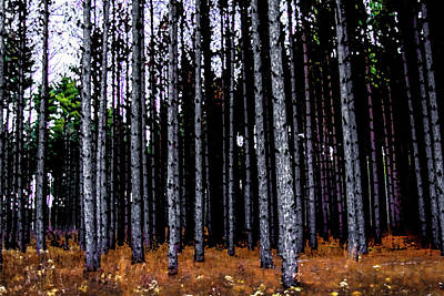 Photograph - On The Edge Of A Wood by Michael Arend