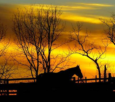 Photograph - On The Farm At Sunset by Donald C Morgan