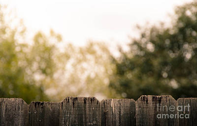 Photograph - On The Fence by Andrea Anderegg