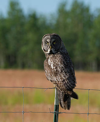 Photograph - On The Fence by Doug Lloyd