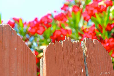 Botanical Photograph - On The Fence by Sontia Hall