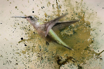 On The Fly Hummingbird Art Print by Jai Johnson