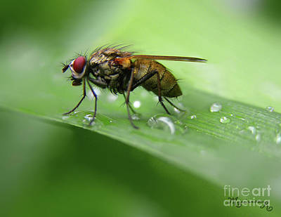 Photograph - On The Fly... by Mariarosa Rockefeller