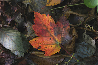 Photograph - On The Forest Floor by Andrew Pacheco