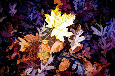On The Forest Floor Vivid Colors Art Print
