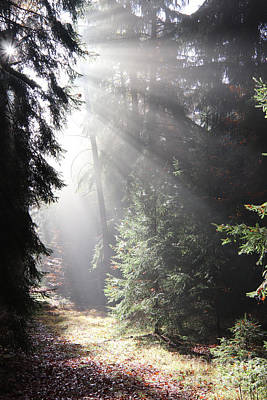 Photograph - On The Forest Path Early In The Morning by Michal Boubin