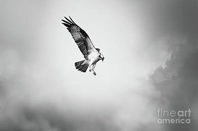 Photograph - On The Hunt Bw by Michael McStamp