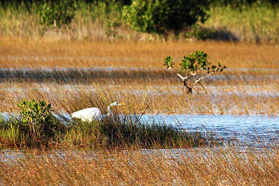 Photograph - On The Hunt by Debbie Oppermann