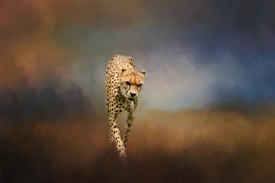 Photograph - On The Hunt by Kim Hojnacki