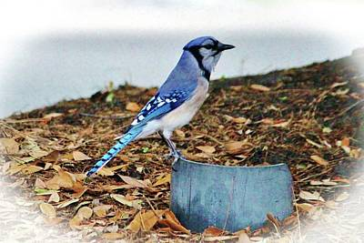 Bluejay Digital Art - On The Look Out  by Cynthia Guinn