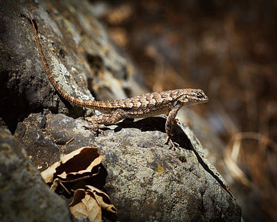 Alligator Lizards Photograph - On The Look Out by Kelley King