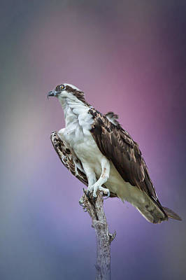 Plumage Photograph - On The Lookout By Darrell Hutto by J Darrell Hutto