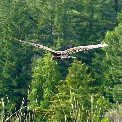 Vulture Digital Art - On The Lookout by JoAnn SkyWatcher
