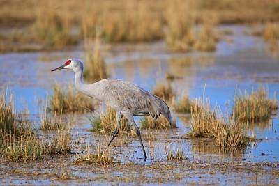 Photograph - On The Move In The Water by Lynn Hopwood