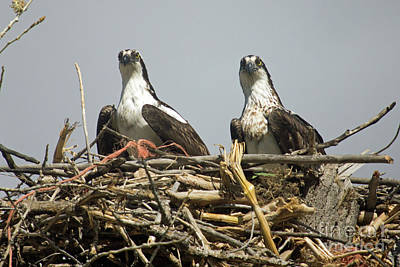 Photograph - On The Nest by Bob Hislop