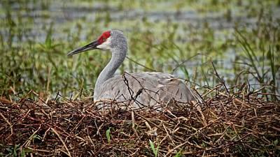 Photograph - On The Nest by Carol Bradley