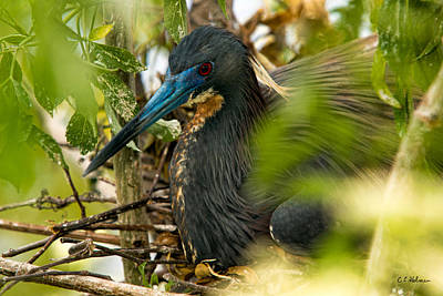 Photograph - On The Nest by Christopher Holmes