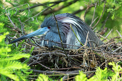 Photograph - On The Nest by Gregg Southard