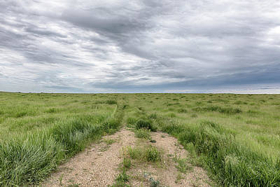Photograph - On The Open Prairie by Susan Rissi Tregoning