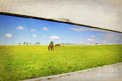 Kentucky Horse Park Photograph - On The Other Side by Darren Fisher
