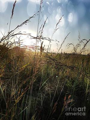 Photograph - On The Prairie by Maria Urso