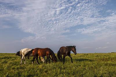 Photograph - On The Prairie by Scott Bean