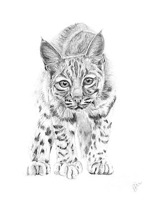 On The Prowl A Young Bobcat Art Print