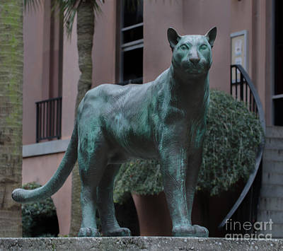 Photograph - On The Prowl by Dale Powell