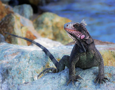 Lizard Wall Art - Photograph - On The Prowl by Karen Wiles