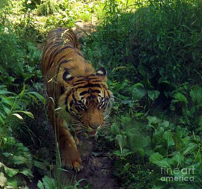 Photograph - On The Prowl by Sara Raber