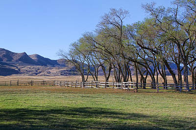 Photograph - On The Ranch by Ely Arsha