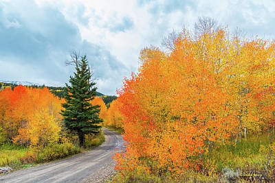 Photograph - On The Road To Lower Cataract Lake by Stephen Johnson