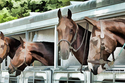 Photograph - On The Road With The Show Horses  by Wilma Birdwell