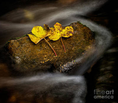 Photograph - On The Rocks by Adrian Evans