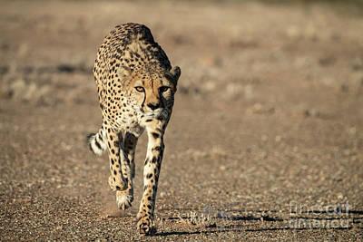 Photograph - On The Run  by Sandra Bronstein