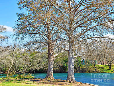 Photograph - On The San Marcos River Texas by Ray Shrewsberry