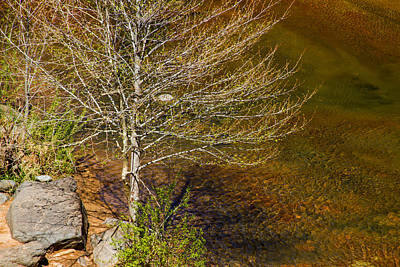 Photograph - On The Shores Of Oak Creek by Bonnie Follett