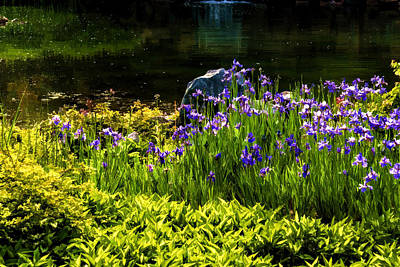 Digital Art - On The Sunny Bank Of The Pond - Enjoy Summer by Georgia Mizuleva