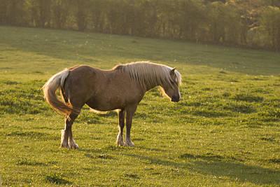 Palomino Horse Photograph - On The Sunny Meadow by Angel Ciesniarska