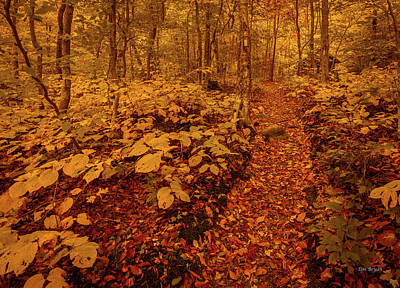 Photograph - On The Trail-smugglers Notch, Vermont by Tim Bryan
