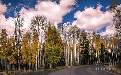 Photograph - On The Way To Fall by Robert Bales