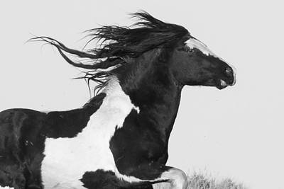 Washakie Photograph - On The Wind by Sandy Sisti