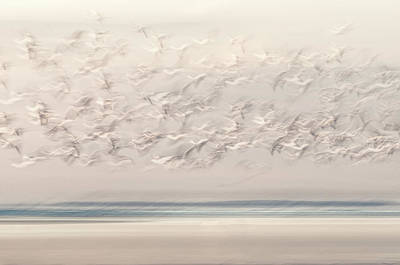 Photograph - On The Wing by John Whitmarsh