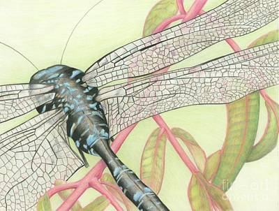 Drawing - On The Wing by Tammie Painter
