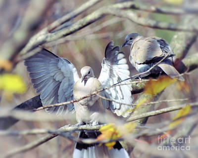 Photograph - On The Wings Of A Dove by Kerri Farley