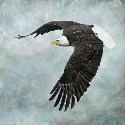 Photograph - On The Wings Of An Eagle by Angie Vogel